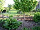 unser Bauerngarten Nr.1
